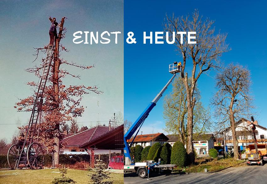 Baumfaellung Urban Münchner Baumpflege