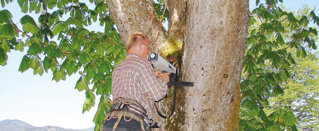 Urban Münchner Baumpflege Baumdiagnostik