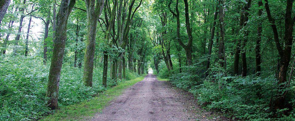 Lebensqualität Urban Münchner Baumpflege