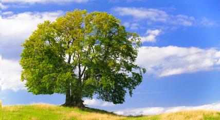 Baumschutzverordnung Urban Münchner Baumpflege
