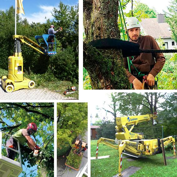 Urban Münchner Baumpflege
