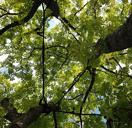Dreicksverspannung Urban Münchner Baumpflege