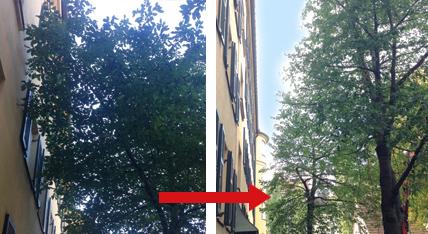 Fassadenschnitt Urban Münchner Baumpflege