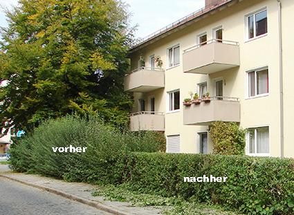Heckenschnitt Urban Münchner Baumpflege