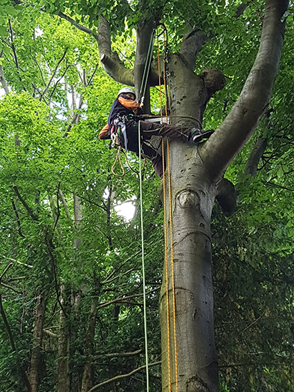 Kletterer Urban Münchner Baumpflege