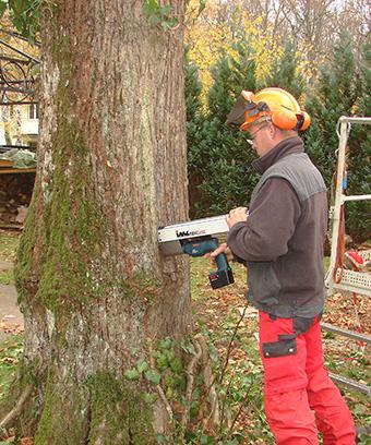 Resistograph Urban Münchner Baumpflege