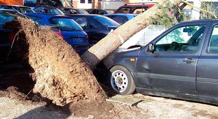 Sturmbruch Urban Münchner Baumpflege