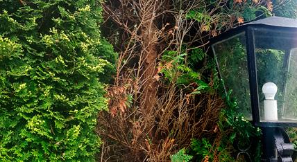 Trockenheit Urban Münchner Baumpflege