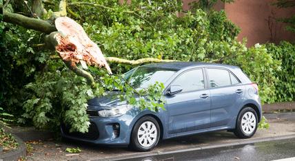 Verkehrssicherheitspflicht Urban Münchner Baumpflege
