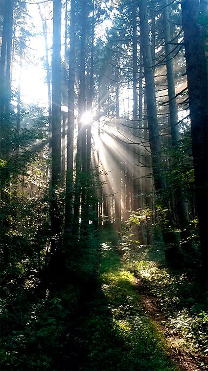 Waldlicht Urban Münchner Baumpflege